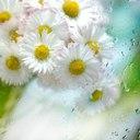 Красивые цветы картинки и фото
